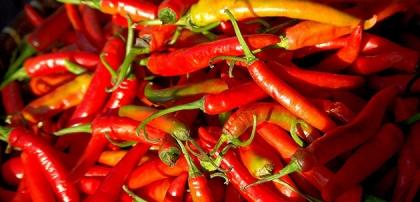 Chilins goda egenskaper